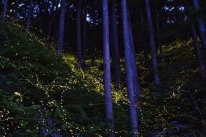Hime_kansei5_2